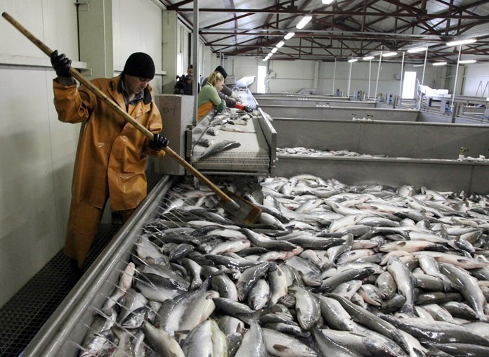 рыболовное хозяйство минск